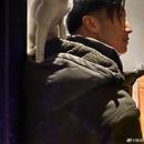 寵物博主上線!謝霆鋒露側顏寵物貓騎肩頭超帥氣