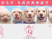 北京嘉华影城学清路店《小Q》明星见面会火爆预售