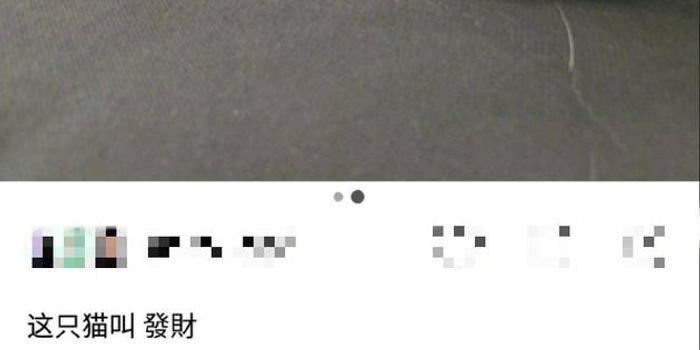 """起名鬼才上线!吴亦凡给橘猫起名叫""""发财"""""""