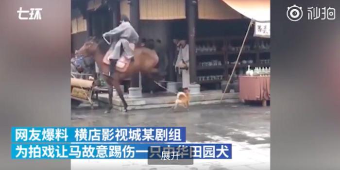 《孤城闭》剧组否认拍戏虐狗:牵绳是保证不乱跑