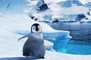 尚品生活|南极游选团是门学问