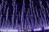 动起来 超梦幻的足利花卉公园冬季点灯活动开幕啦