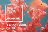 2019年度流行色发布――珊瑚橙