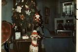 老照片记录上世纪50年代的圣诞树 和现在有何不同?