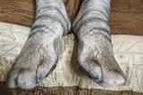 连肉球都有的超拟真猫袜上线 人型巨猫即视感
