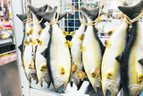 水产特色鲑鱼包 没错是刚捕鱼回来