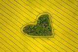 唯美的爱情之林