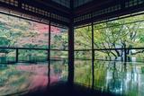 日本京都那迷人的秋