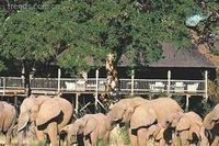狂野的激情 南非生態蜜月地