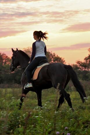 周末去哪儿:爱上一匹马 可家里没有草原怎么办?