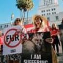 美国加州正式禁止制造销售皮草 时尚让动物与人类愈发亲密