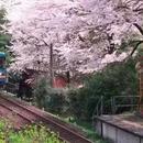 票价上百万日元 超豪华火车游日本你考虑一下
