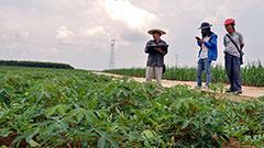 国务院决定于2016年开展第三次全国农业普查