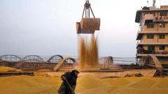 第四天:大豆种植面积增加 长势良好迎丰收