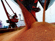 粮食服务平台出现 继续种植大豆意愿不强