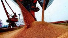 第四天:粮食服务平台出现 继续种植大豆意愿不强