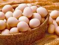 国都期货:鸡蛋策略报告