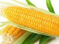 节后玉米市场需要关注的几件事