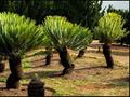 瑞达期货:棕榈增仓回落 短期走势反复