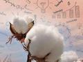 统计局:中国2017年棉花产量549万吨