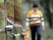 上期所:确保天然橡胶期权平稳上市