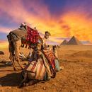 埃及首批中国国际进口博览会参展品起运
