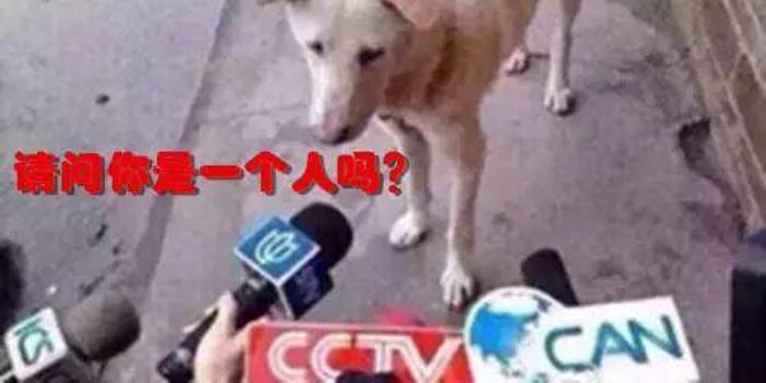 马云刘强东王思聪的告白往事
