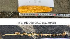 东线第四天:双鸭山密山大豆转增面积 种植补贴核查难度大