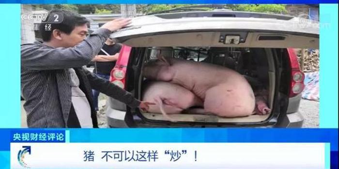 """央视财经评""""炒猪团"""":""""炒""""的是猪 害的是人"""