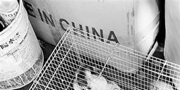土拨鼠销售资质界定模糊 网红萌宠带来诸多危险