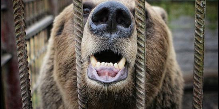 尽管年初市场强劲反弹 但美股进入熊市的可能仍存在