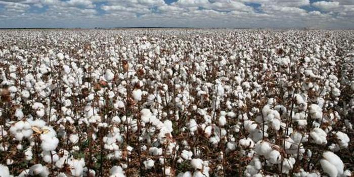 郑商所:积极提升期权服务棉纺产业能力