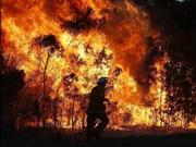 澳洲消防员强化隔离带 山火相关经济及环境成本攀升