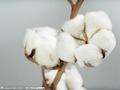 郑商所:完善涉棉期货市场建设 服务产业发展