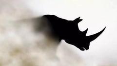 天风证券:无法预测的黑天鹅与远方的灰犀牛