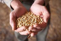 中粮宣布又采购百万吨美国大豆