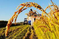中共中央、国务院:确保永久基本农田15.46亿亩以上