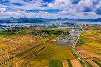 中共中央、国务院:实施大豆振兴计划和奶业振兴行动