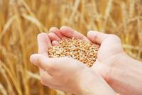 韩长赋:要严守18亿亩耕地红线 巩固提高粮食生产能力
