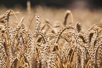韩长赋:优化农业结构 突出农业供给侧结构性改革