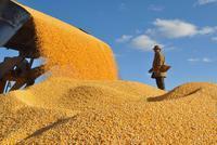 农业农村部:粮食总产量连续7年稳定在1.2万亿斤以上