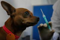 政协委员高福:狂犬病预防应以犬类接种狂犬疫苗为主