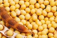 海关总署:1-4月大豆进口2439万吨 减少7.9%