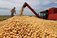 今年前7个月大豆进口4690万吨 同比减少11.2%
