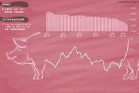 """8月猪价加快上涨 多省打响猪肉供应""""保卫战"""""""