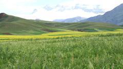 农业部:将开展土地经营权入股发展农业产业化经营试点