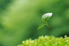 易綱:建立氣候環境信息披露制度 研究推廣至上市公司等市場主體