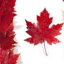 對衝美國貿易壁壘!加拿大思考應變之策