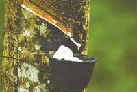 天然橡胶期权合约规则50问(五)