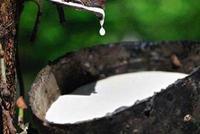 天然橡胶期权合约规则50问(四)